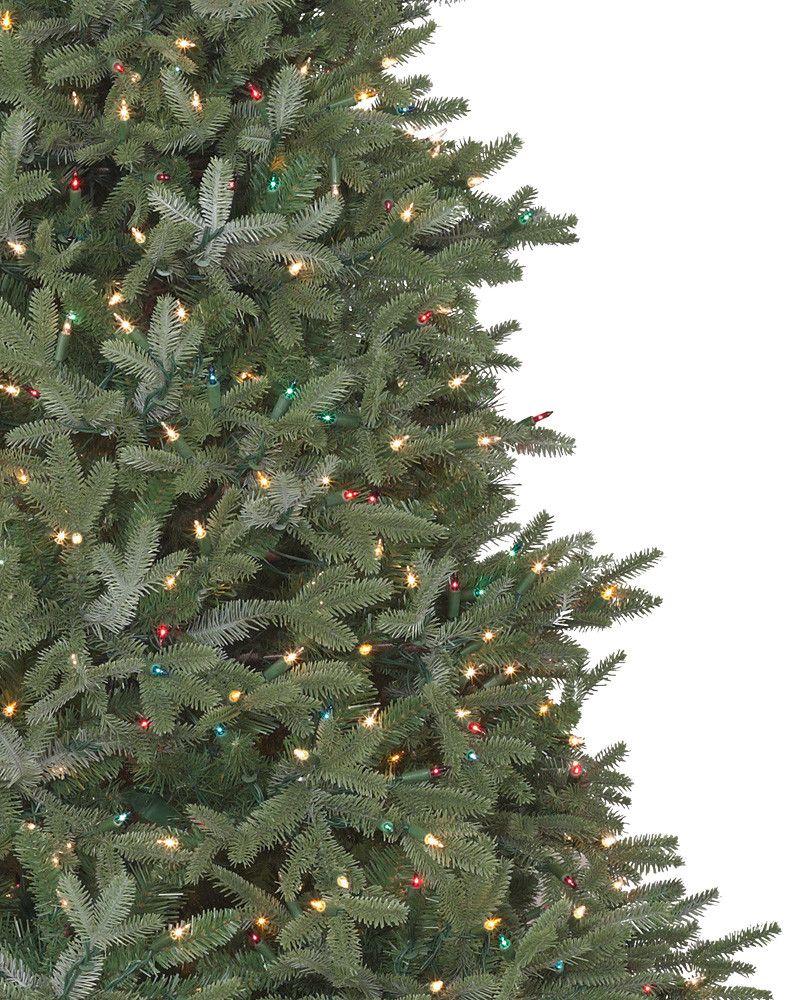 bh fraser fir tree3