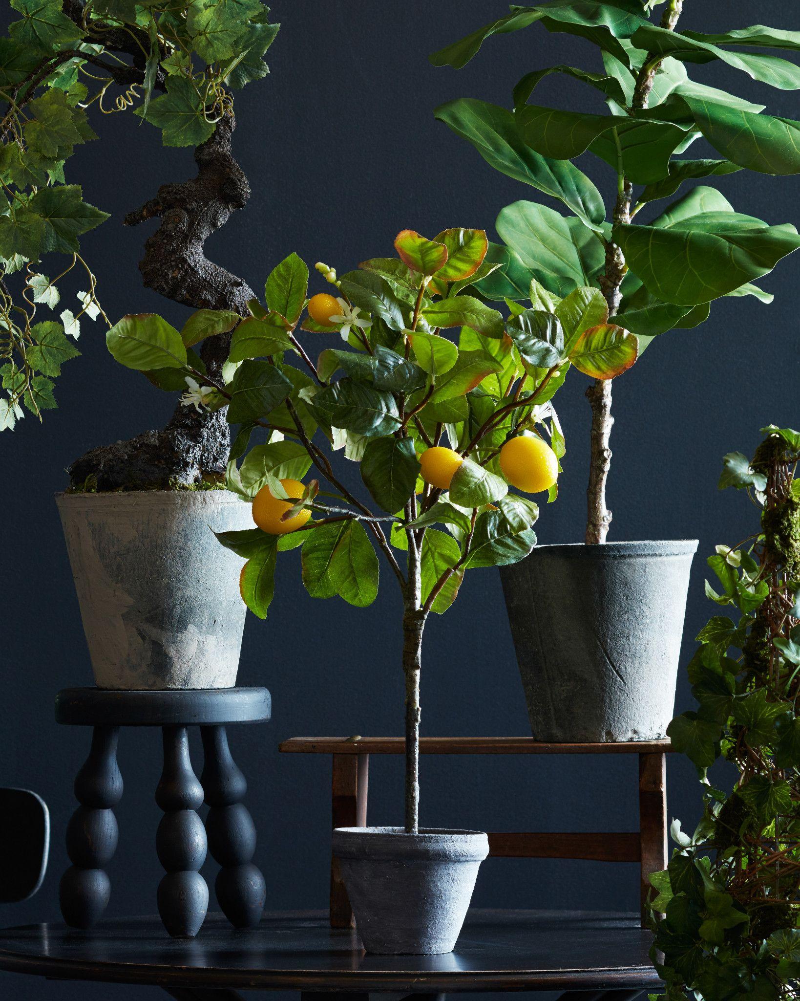 meyer lemon tree balsam hill