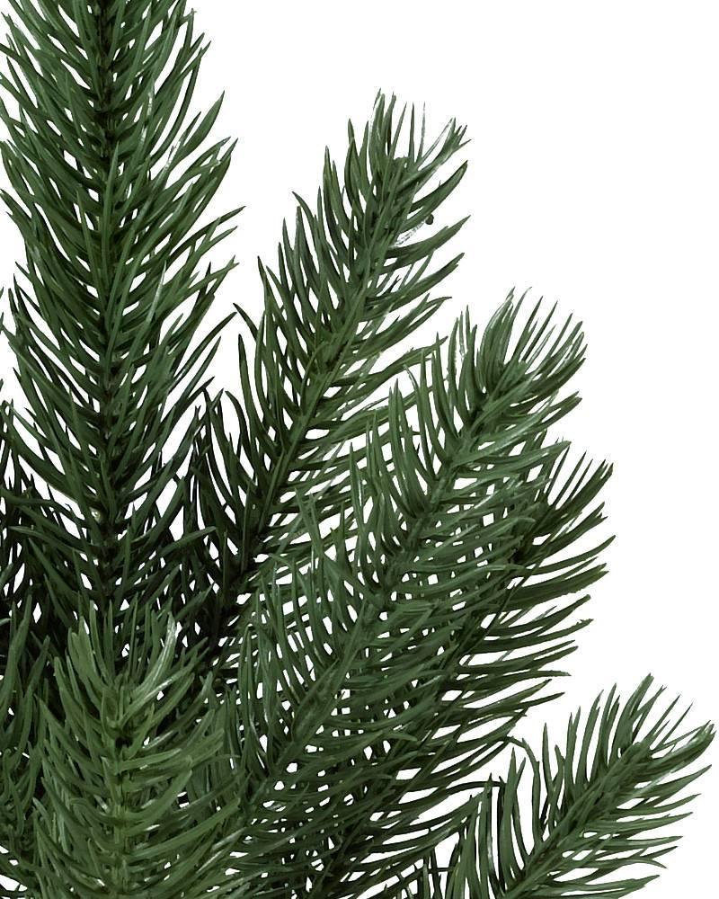 vermont white spruce tree 1s - White Spruce Christmas Tree