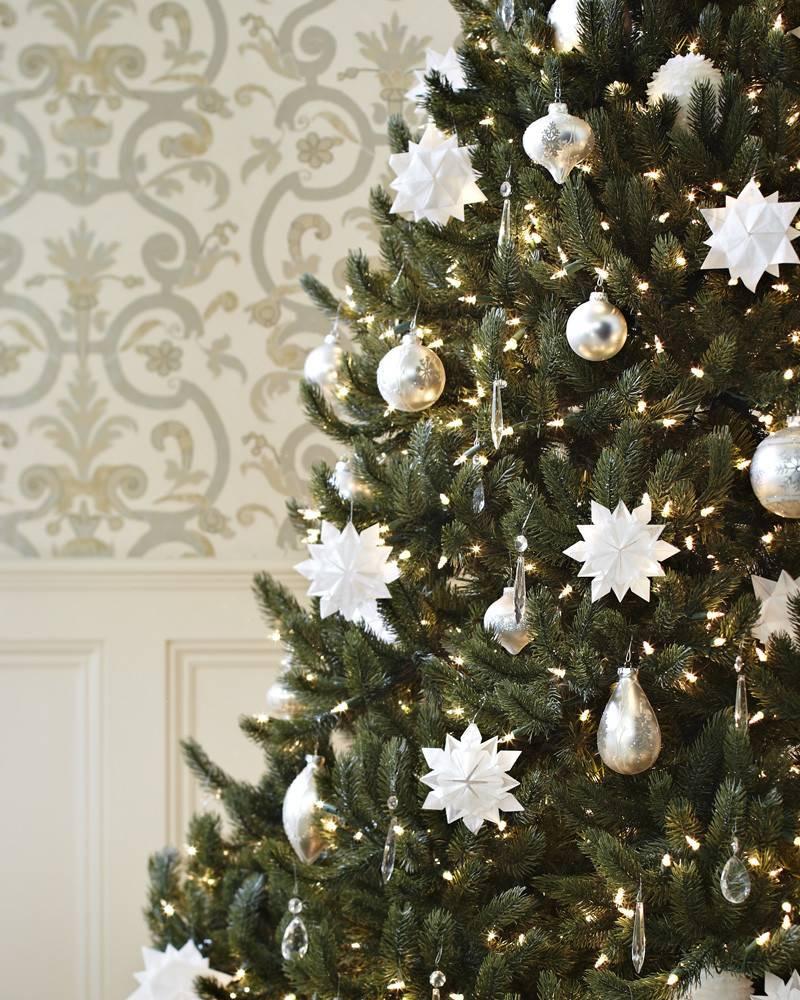 vermont white spruce tree 16 - White Spruce Christmas Tree