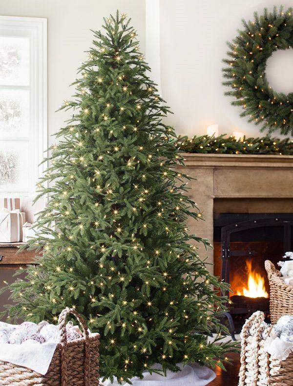 brewer spruce tree5