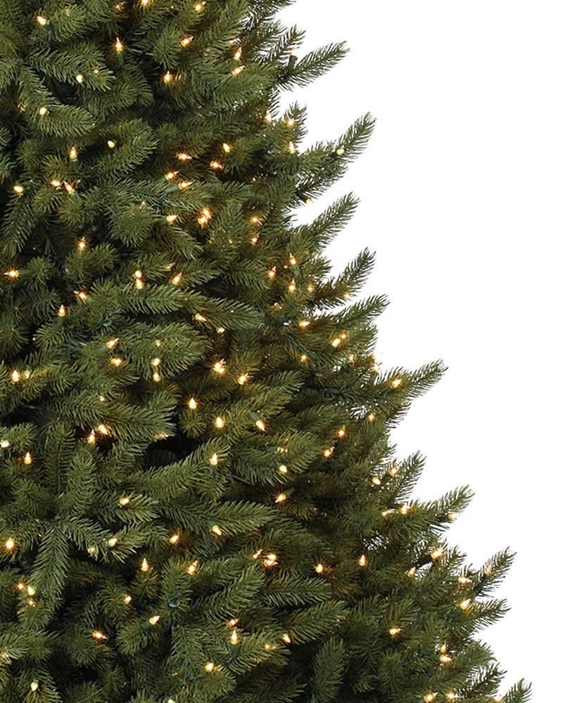 vermont white spruce narrow 19 - White Spruce Christmas Tree